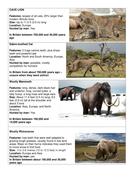 Lesson-4---megafauna.docx