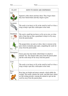 seed dispersal worksheets for key stage 2 science by rhiannonallen teaching resources. Black Bedroom Furniture Sets. Home Design Ideas