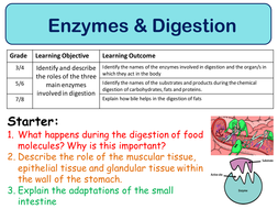 new aqa trilogy gcse 2016 biology digestive enzymes by swiftscience teaching resources tes. Black Bedroom Furniture Sets. Home Design Ideas