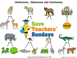 Carnivores and Herbivores KS1 Lesson Plan, Worksheets and Display ...