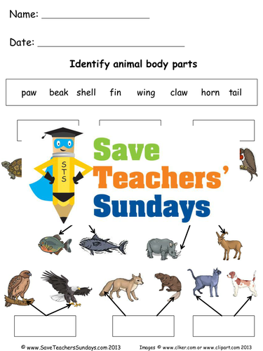naming animal body parts ks1 lesson plan and worksheets by saveteacherssundays teaching. Black Bedroom Furniture Sets. Home Design Ideas