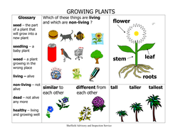 ks1 growing plants science vocabulary and spelling list. Black Bedroom Furniture Sets. Home Design Ideas