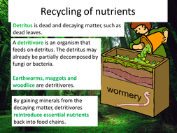 GCSE Biology B7 - Genetic Tech, stem cells, homeostasis, blood, learning  from nature 14 RESOURCES