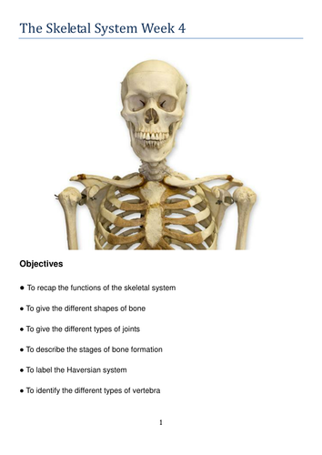 the skeletal system gcse and a level biology access 8 resources ppts and booklets by. Black Bedroom Furniture Sets. Home Design Ideas