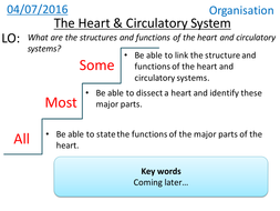 The Heart & Circulatory System - NEW GCSE