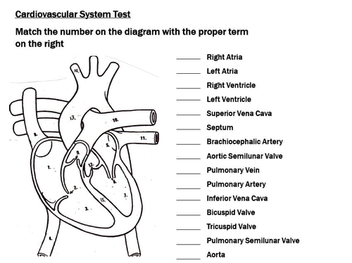 Cardiovascular System Unit Circulatory System Bundle by – Circulatory System Worksheet