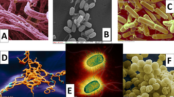 Bacterial Morphology (Shape) Identification by mightygus