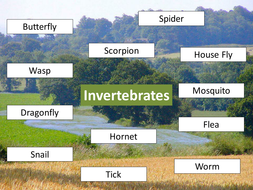 Invertebrates Venn diagram starter with activities to follow