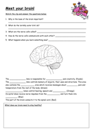 Meet-your-brain.docx
