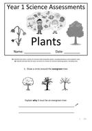 Y1---Plants.docx