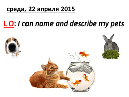 Pets and their description.