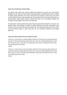 Extracts-Lesson-4.docx