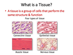 Body Tissues Powerpoint And Worksheet By Sciencespot Teaching