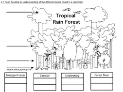 4 way differentiated Layers of the Rainforest worksheets