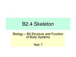 B2.4-Skeleton---LP.pptx