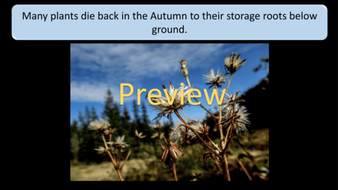 preview-images-autumn-days-powerpoint-16.png