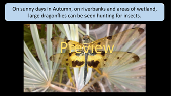 preview-images-autumn-days-powerpoint-14.png