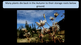 preview-images-autumn-days-powerpoint-20.pdf