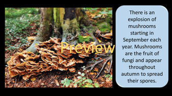 preview-images-autumn-days-powerpoint-17.png