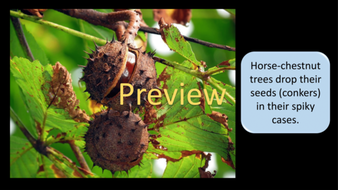 preview-images-autumn-days-powerpoint-12.png