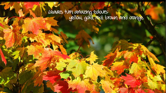 preview-images-autumn-posters-with-captions-9.pdf