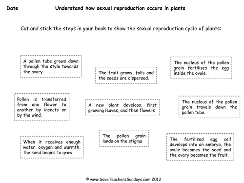 process of sexual reproduction in plants ks2 lesson plan worksheet and extension worksheet by. Black Bedroom Furniture Sets. Home Design Ideas