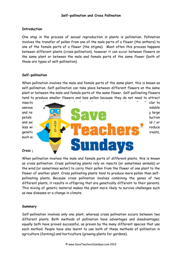 self pollination and cross pollination ks2 lesson plan and worksheets by saveteacherssundays. Black Bedroom Furniture Sets. Home Design Ideas