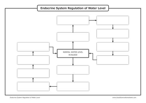 Homeostasis Endocrine System Regulation Of Water Level