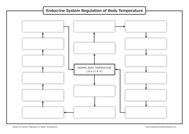 Homeostasis - Endocrine System Regulation of Body Temperature