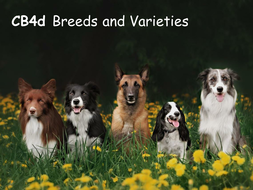 CB4d-Breeds-and-Varieties.pptx