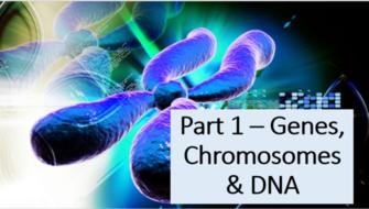 GCSE Core Science (OCR) Biology Bundle
