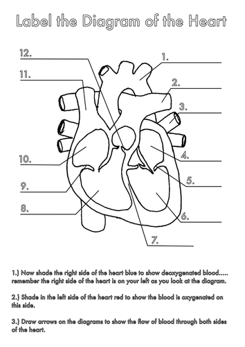 how to draw a human heart with labels