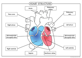 *UPDATED* Four Human Biology Diagrams to Label - Heart ...