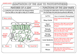 29 Photosynthesis Whats In A Leaf Worksheet Answers ...