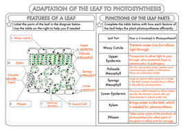 GCSE Photosynthesis Topic Worksheets by beckystoke ...