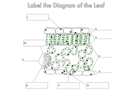 diagram of a leaf spring label a leaf diagram gcse plant biology diagrams to label by beckystoke | teaching resources