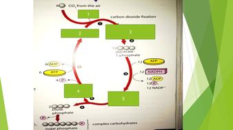Photosynthesis---Lesson-7.pptx