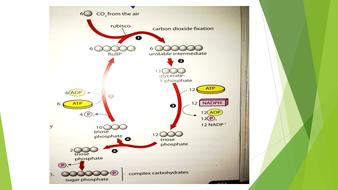 Photosynthesis---Lesson-3-.pptx