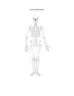 HumanSkeletalSystem.pdf