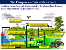 phosphorus cycle simple explanation