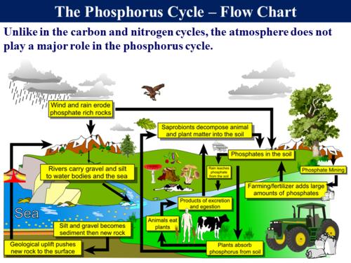 354 The Phosphorus Cycle by RGeorge15 Teaching Resources Tes – Phosphorus Cycle Worksheet