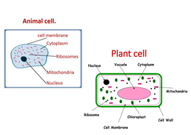 Plant and animal cells lesson 2 chapter 1 activate 1 by plant and animal cells lesson 2 chapter 1 activate 1 ccuart Gallery