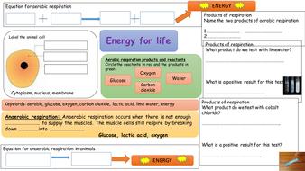 respiration-activity.pptx