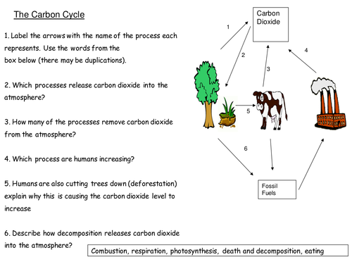Carbon cycle and green house effect activities by tomllewellyn – Carbon Cycle Worksheet
