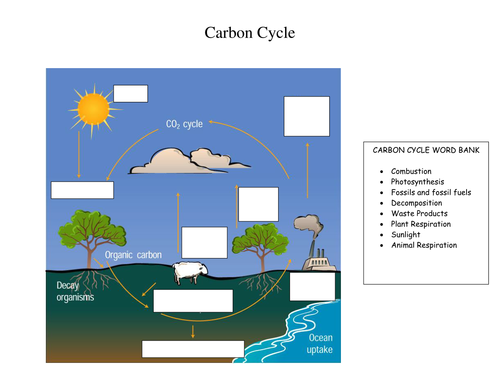 Carbon cycle and green house effect activities by tomllewellyn carbon cycle and green house effect activities by tomllewellyn teaching resources tes ccuart Gallery