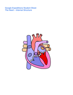 Google-Expeditions-The-Heart---Internal-Structure-Student-Sheet.docx