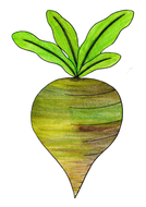 size-ordering-turnips.pdf
