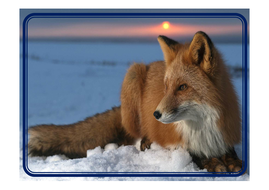 animal-photos-in-snow.pdf