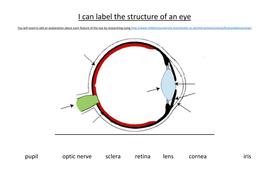 label the eye | teaching resources label eye diagram ks2 parts of the eye tes