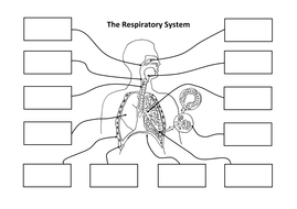 Respiratory system creating a labelled diagram by ineedtoteachthat diagram respiratorysystem cutandstick v2cx ccuart Choice Image